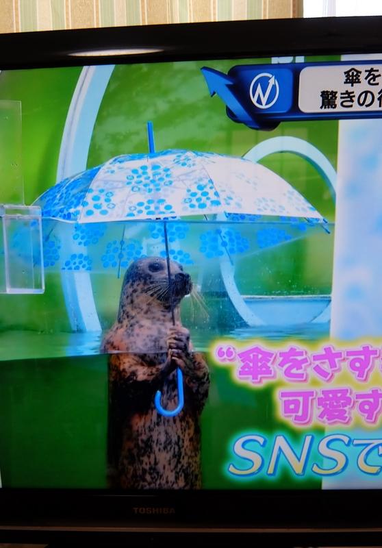 傘 を さす アザラシ